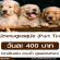 พนักงานดูแลสุนัข (Part Time) วันละ 400 บาท