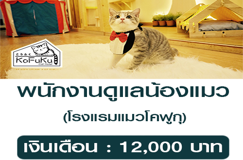 รับสมัครพนักงานดูแลน้องแมว (เงินเดือน : 12,000 บาท)