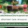 รับสมัครพนักงานชงกาแฟ ร้านกาแฟ Cafe Amazon