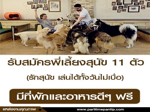 รับสมัครพี่เลี้ยงสุนัข 11 ตัว (มีที่พักและอาหารดีๆ ฟรี)