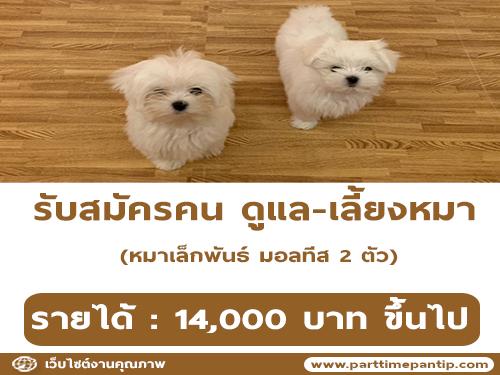 รับสมัครคน ดูแล-เลี้ยงหมา (รายได้ 14,000 บาท ขึ้นไป)